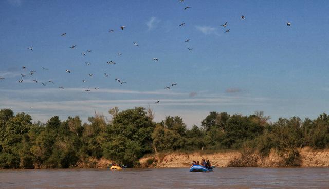 Ornitológico Reserva Natural Galacho de la Alfranca
