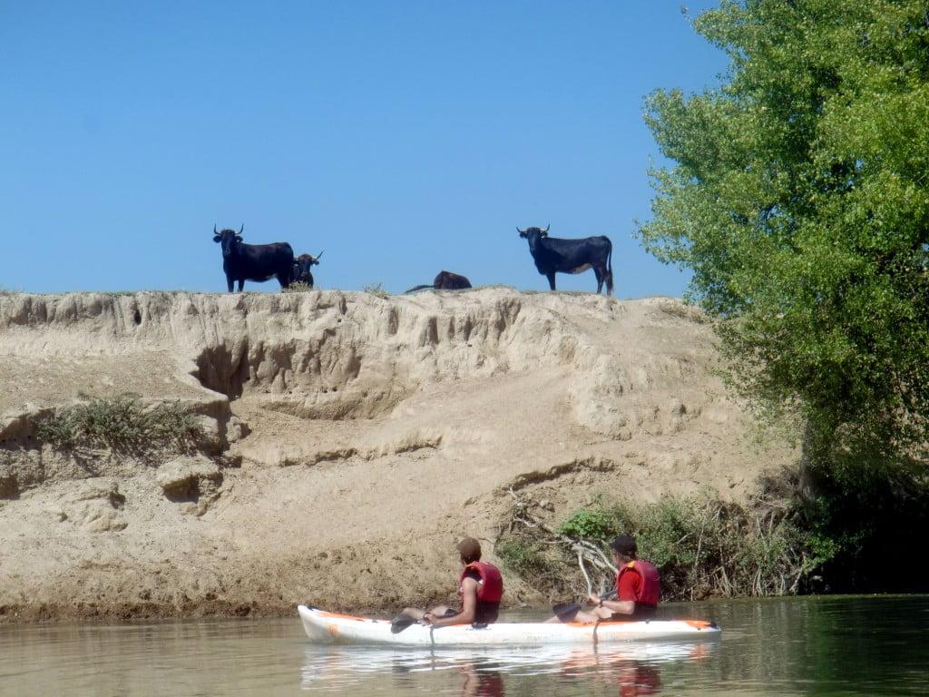 Reses bravas y piragüismo recreativo en la Ribera Alta del Ebro