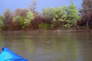 Riberas floridas en el Ebro